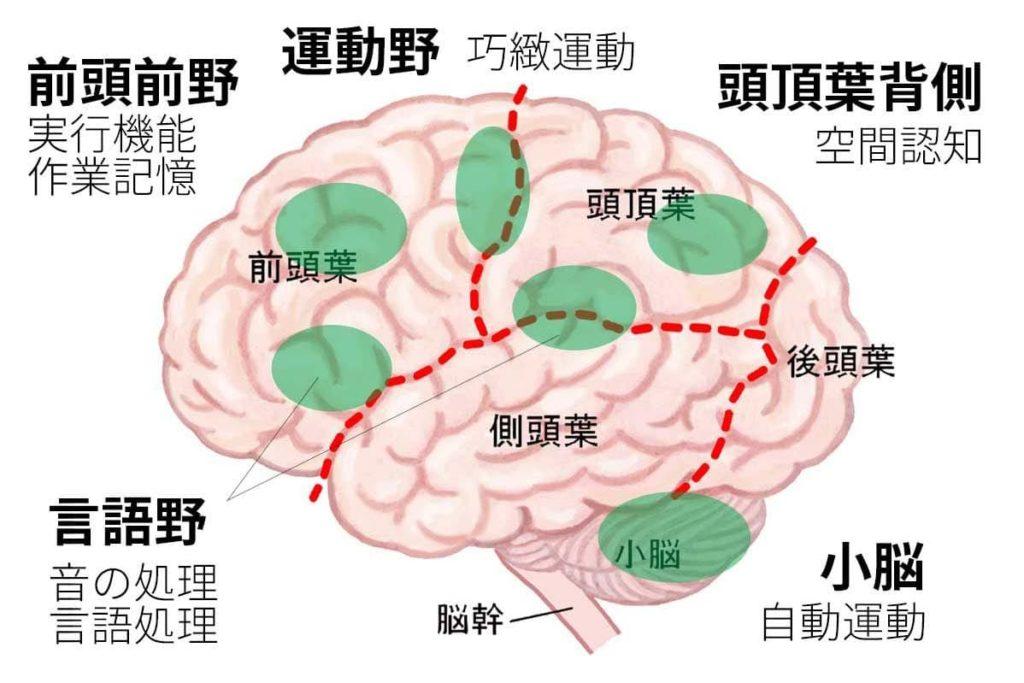 音楽を演奏する時に使う脳の部位